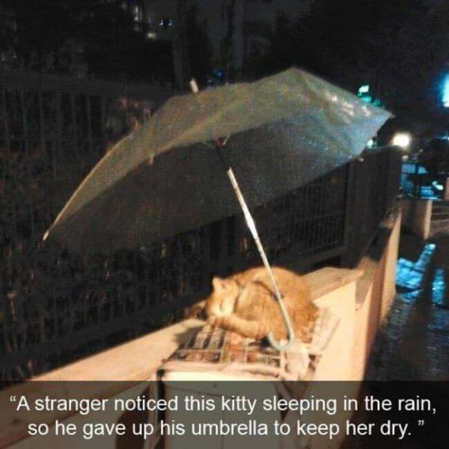 A man who gave his umbrella away so this cat could have a dry night