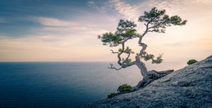 tree and ocean - mindfulness definitions