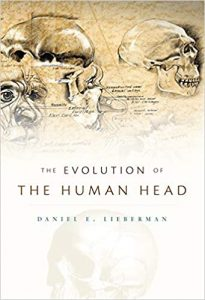 The Evolution of the Human Head