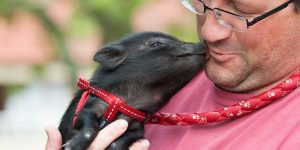 Psychology behind animal therapy