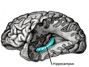 Hippocampus and Mindfulness.
