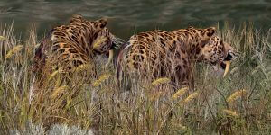 Saber-Toothed Cats as an example of negative bias
