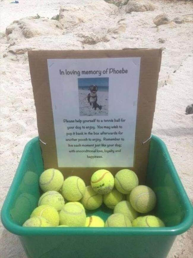 A dog owner who mourned by giving