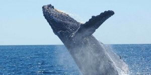 whale - suggestion awe travel experience
