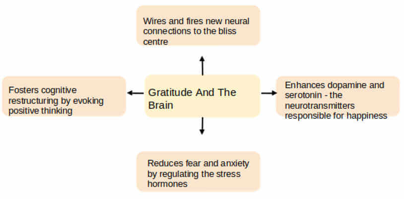 The Neuroscience of Gratitude and How It Affects Anxiety & Grief