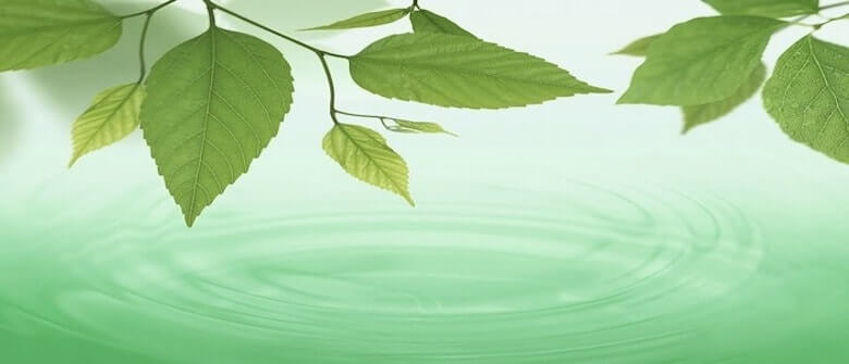 leaves and water - The Mindfulness Based Cognitive Therapy Manual