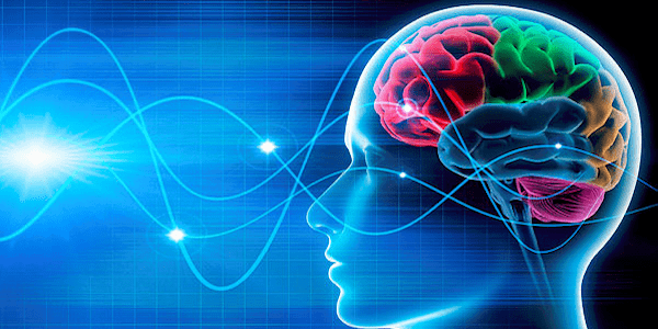 The Theory and Principles of Neuroplasticity